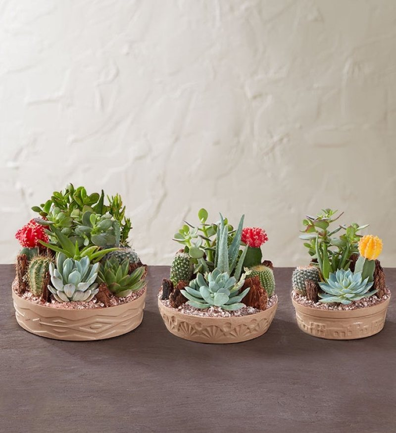 Small cactus gardens set in a shallow southwestern style dishes.