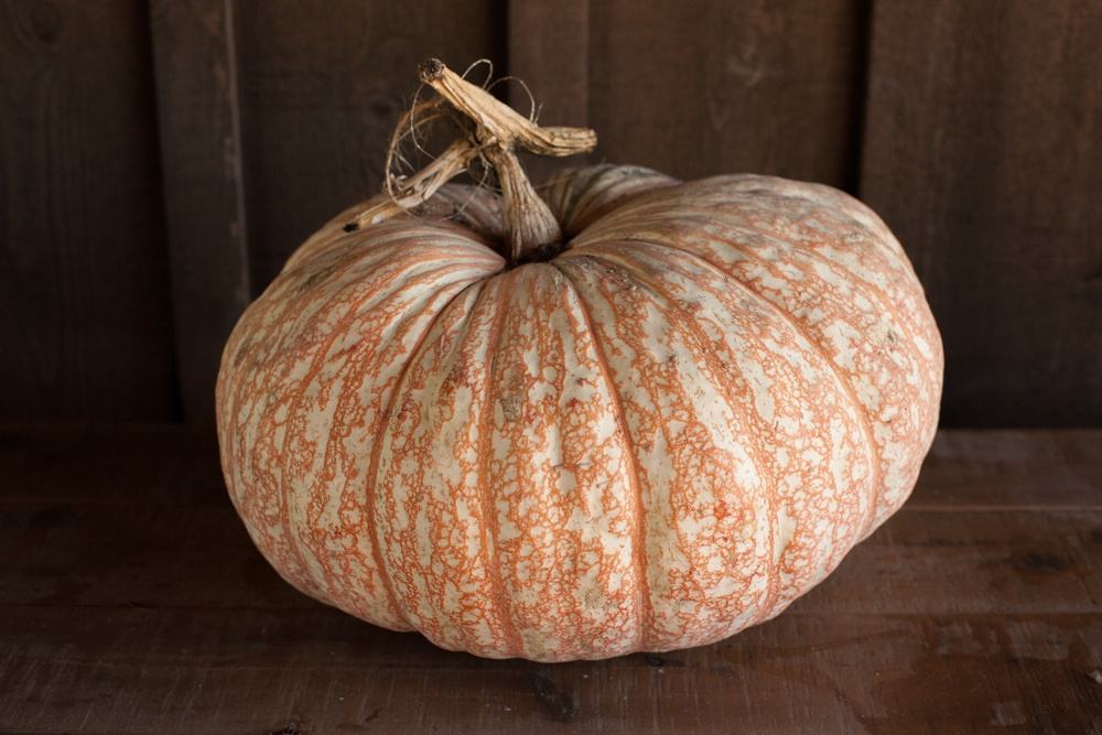 heirloom pumpkin 2