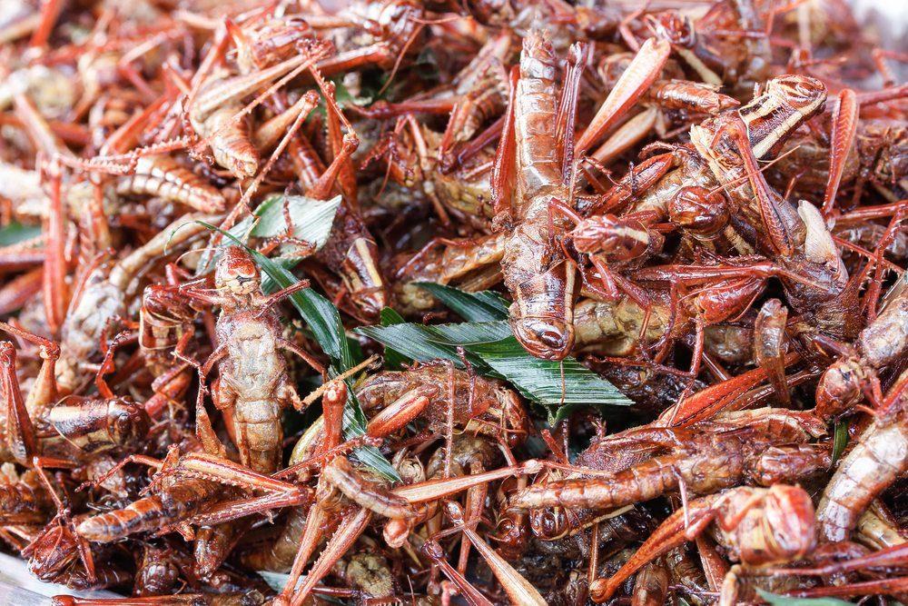 fried locust