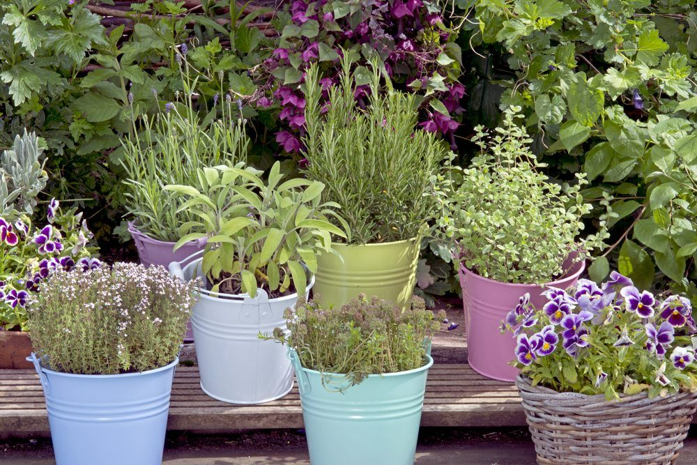 Instead Of Ing The Herbs You Want From A Grocery Creating An Herb Garden