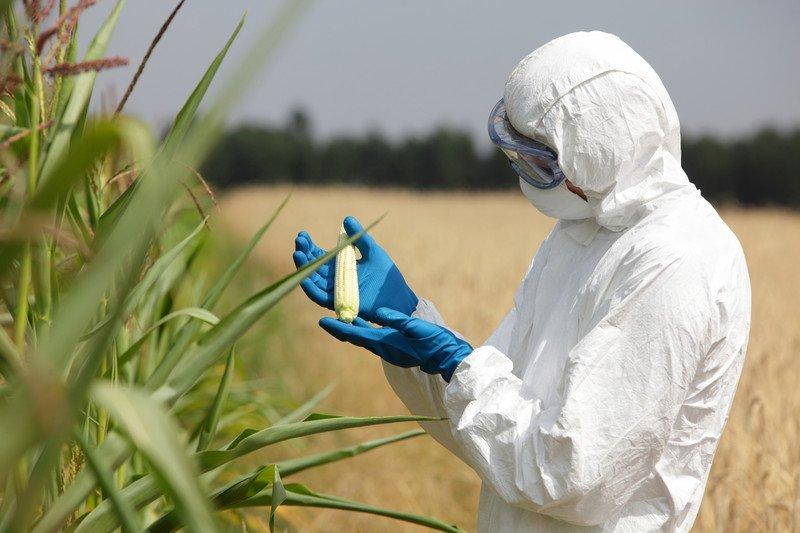 Monitoring a GMO field