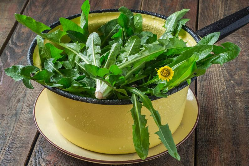 A yellow bowl fillwed with dandelion greens and one flower