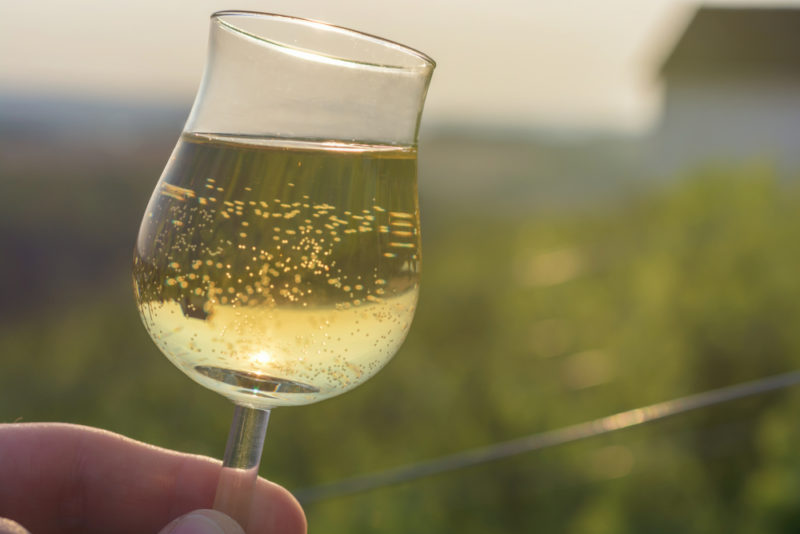 Someone holding a glass of Gewurztraminer wine in their hand, with a vineyard in the background