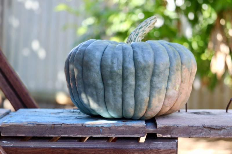 A single blue pumpkin resting on a table outside