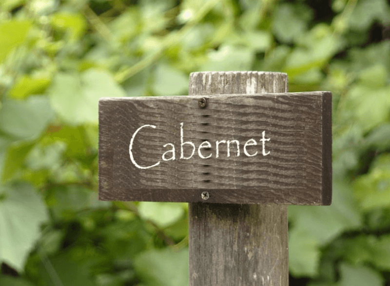 In the background blurred grapevines and in the front a wooden sign on a post with white writing that says Cabernet