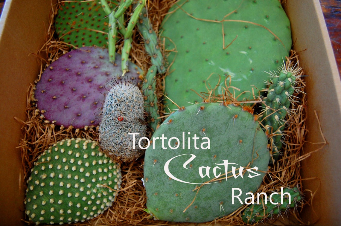 Box with several unique varieties of cactus cuttings.  In the lower right corner it says Tortolita Cactus Ranch
