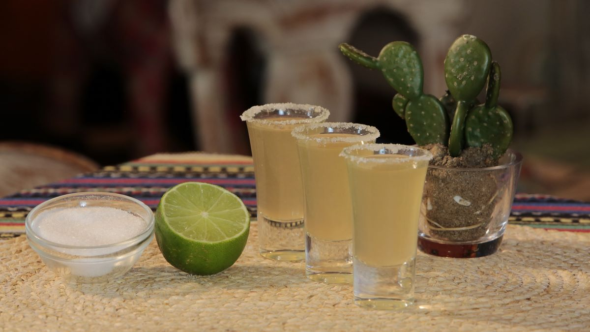 Three tequila shots with salt on the rim and a catus sitting in back plus a cut lime and small bowl of salt off to the left.