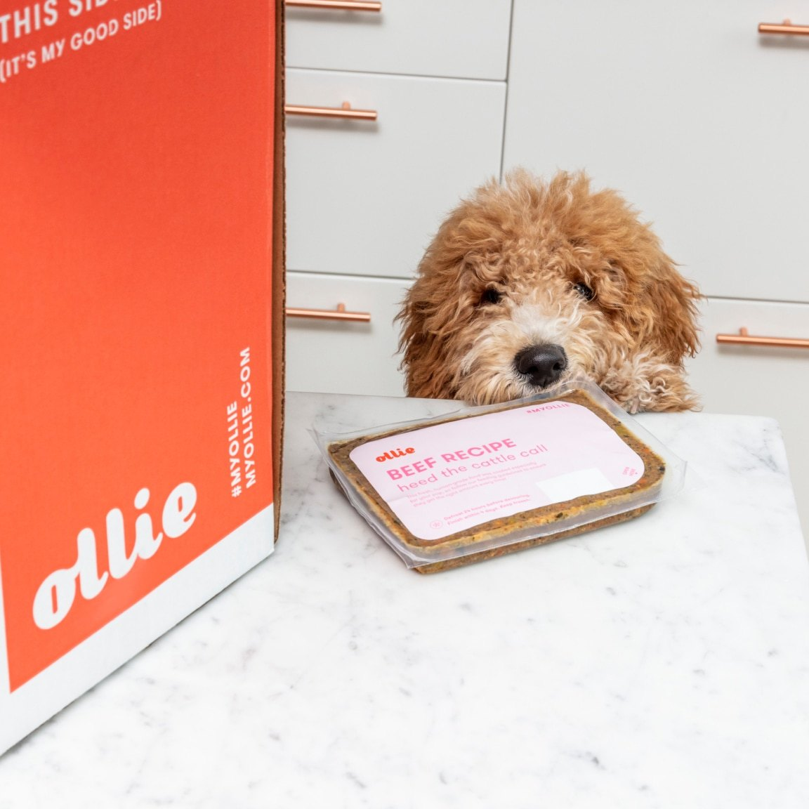 Golden Doodle peeking on the marble counter looking at a bag of my ollie dog food with an orange my ollie box next to it