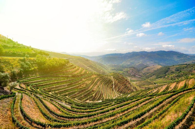 Douro Valley in Porto wine region