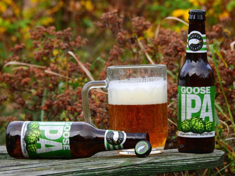 Two bottles of IPA beer with a mug of beer