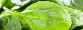 Keto Spinach Smoothie Recipes