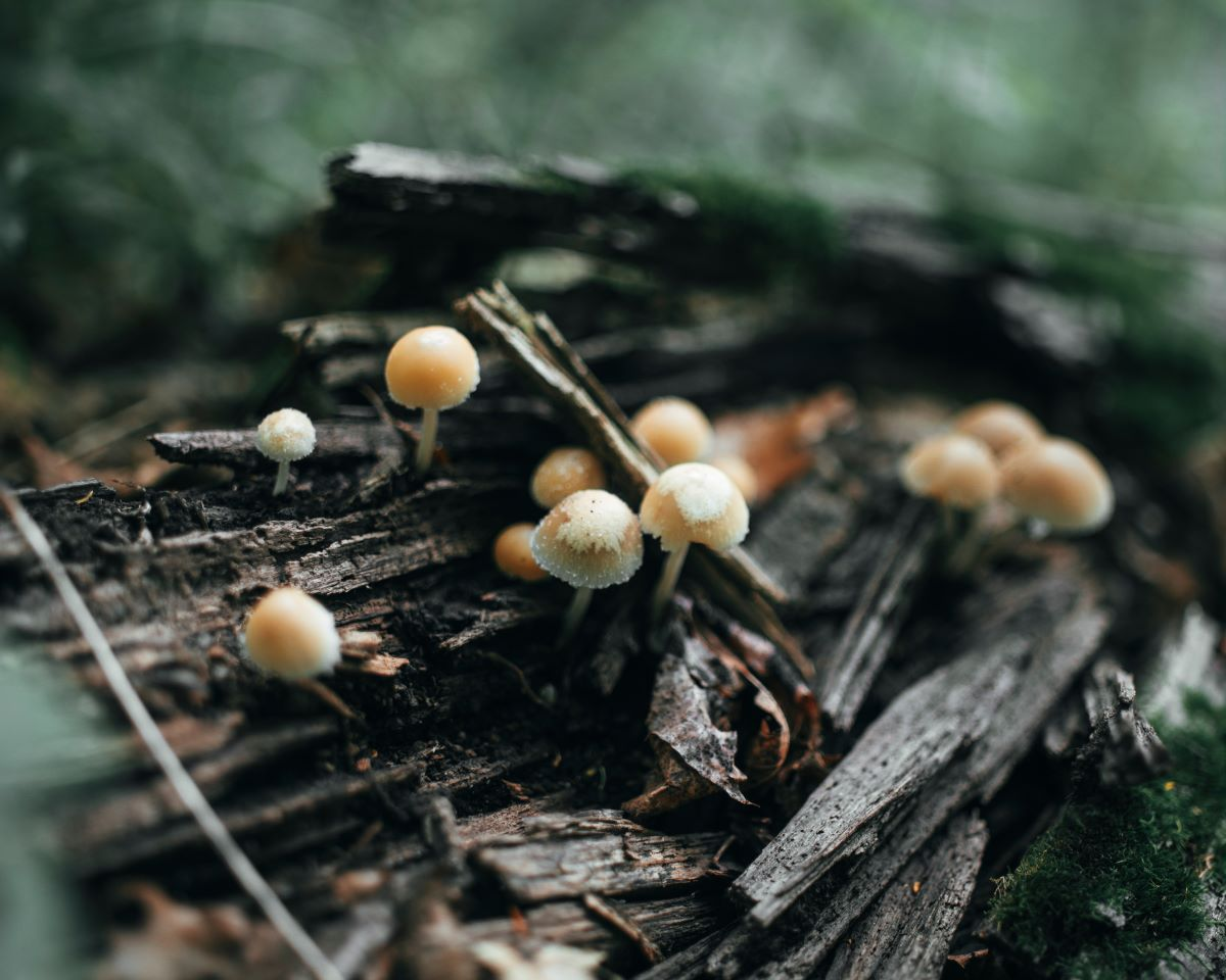 Mushrooms growing on a log in a forest