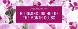 A selection of light pink orchids growing outside with dark pink centers