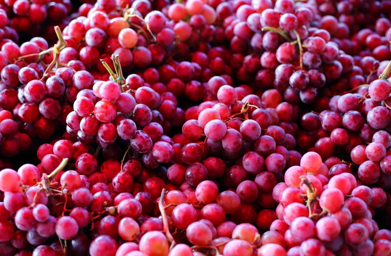 This photo shows a closeup of several bunches of red grapes.