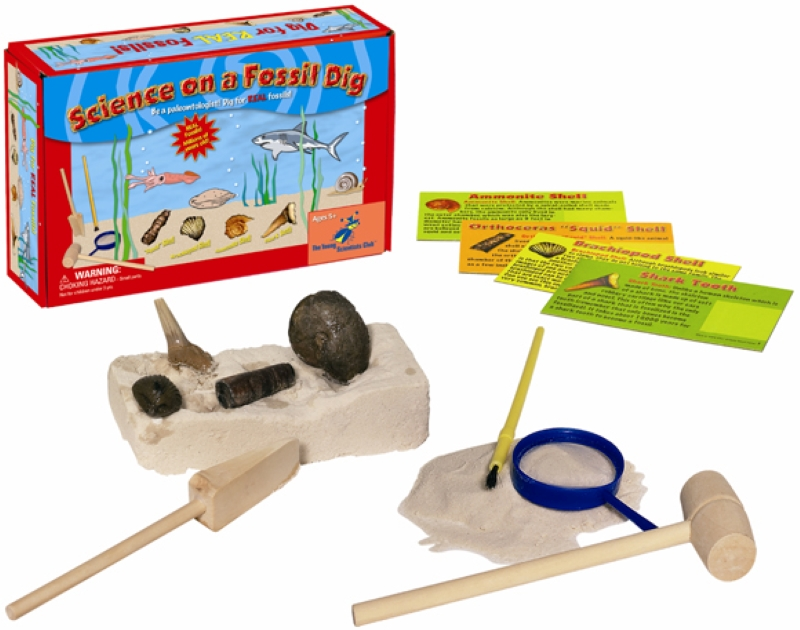 Photo shows Science on a Fossil Dig Box, 4 informational cards, tools and rock and sand.