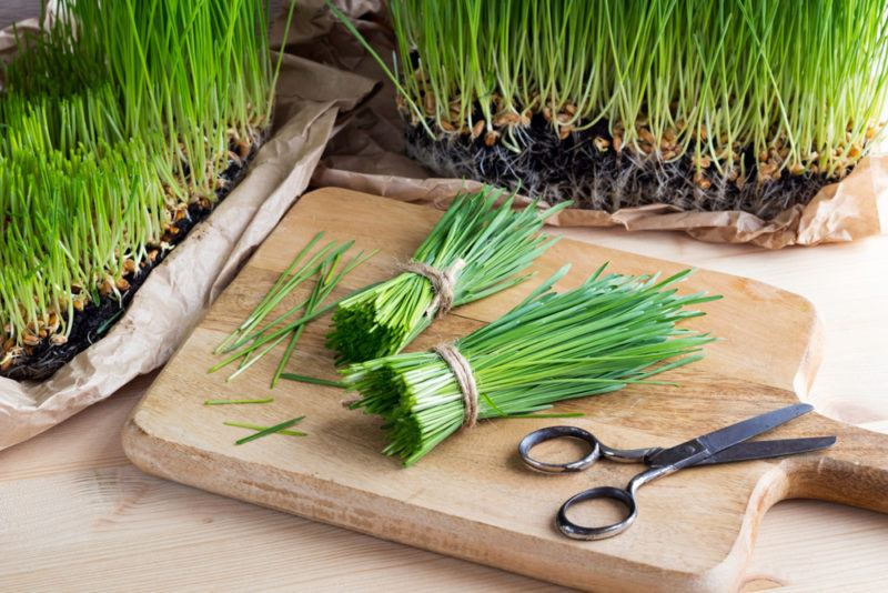 Two planters of wheatgrass, with two bundles of wheatgrass that have been cut on a wooden board