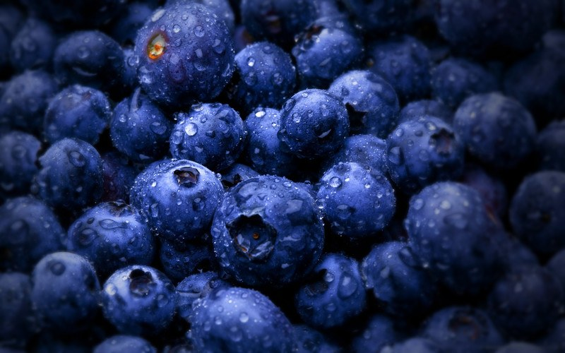 This photo shows a closeup view of blueberries with droplets of water on them.