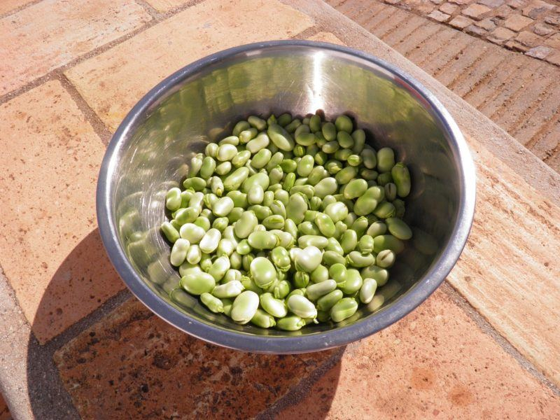 A bowl of fava beans outside to represent where to buy fresh fava beans online