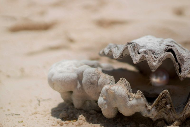 on oyster on the beach with a pearl inside to represent where to buy fresh oysters online