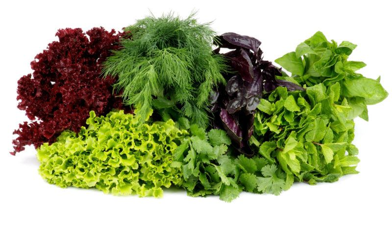 varieties of greens and leafy vegetables like parsley, dill, and lettuce ona white background