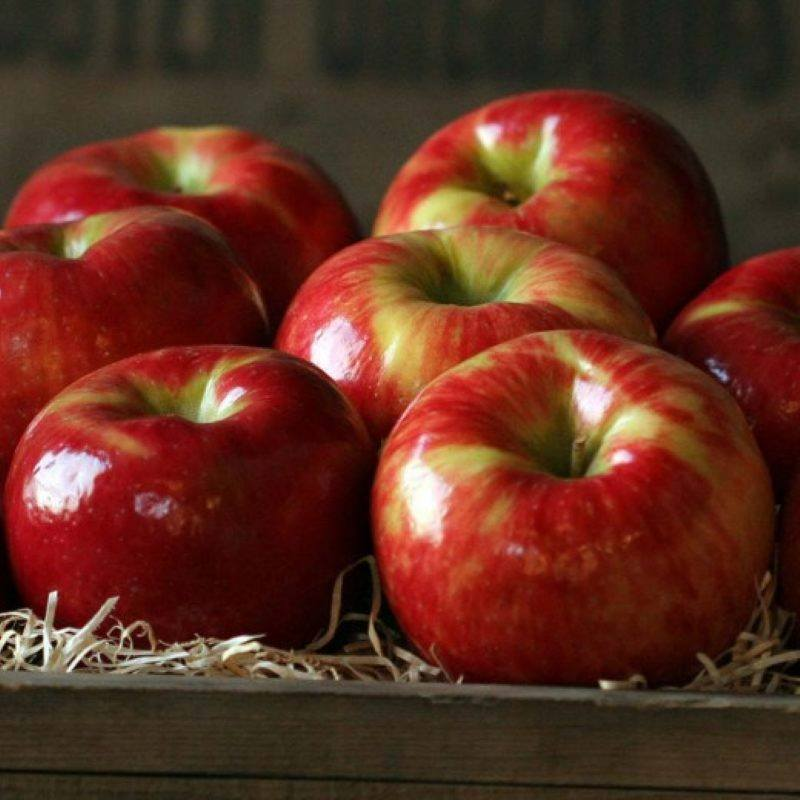 Wooden crate with 7 red shiny apples sitting on natural colored raffia