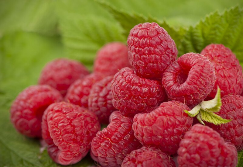 This photo shows several red raspberries against green leaves.