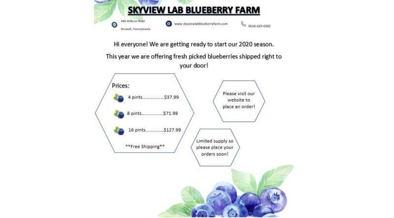 skyview lab blueberry farm home page